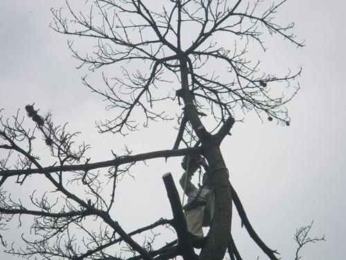 枯損木処理