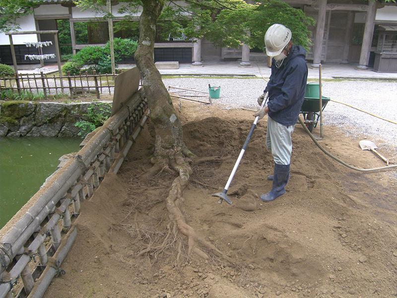 樹木医 作業風景