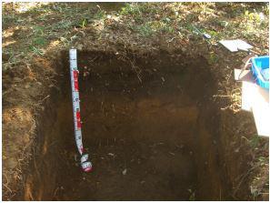 土壌診断・土壌改良